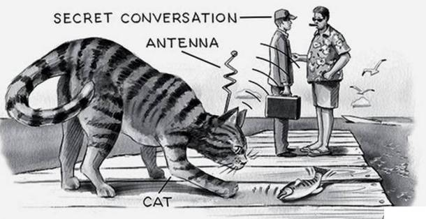 How the CIA Wasted $20 Million On Attempting to Train a Cat