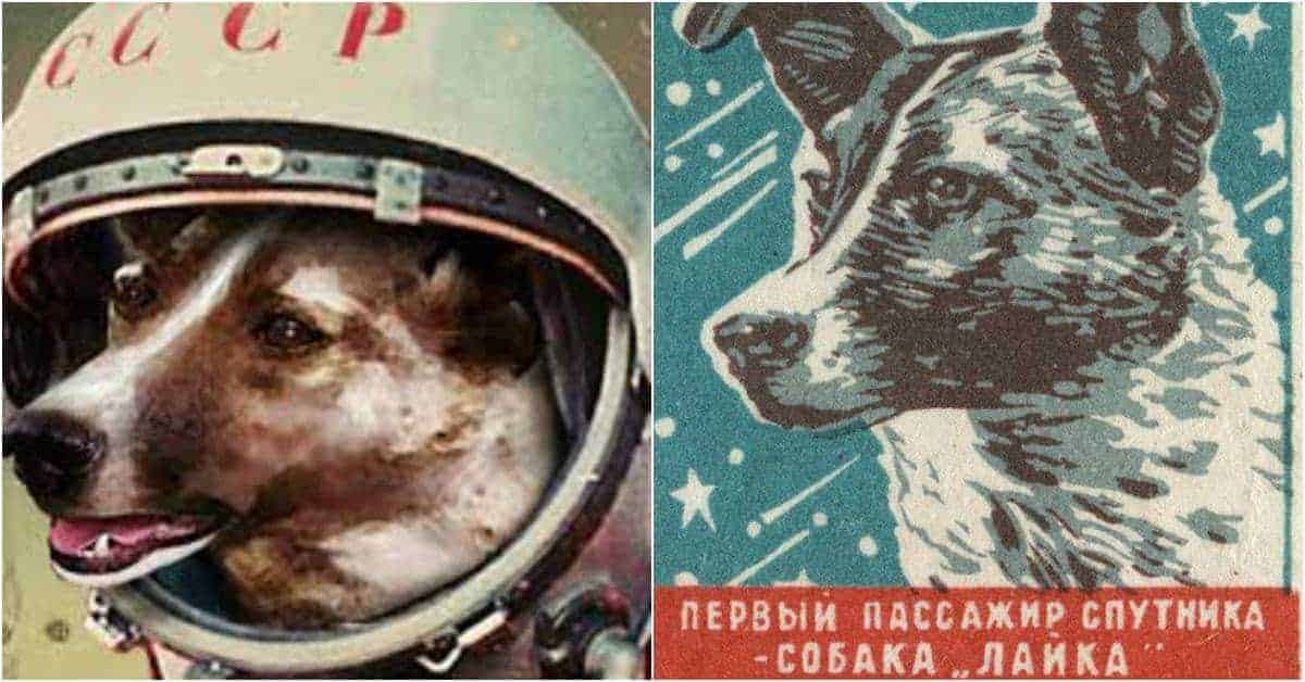 Heartbreaking Photographs of Laika the Soviet Space Dog