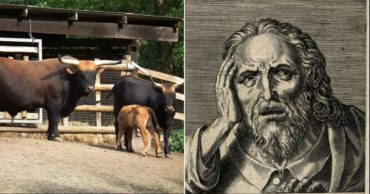 Don't Miss Nazi Super Cows and Deadly Bulls**t in This List of Top 10 Overlooked Historic Oddities
