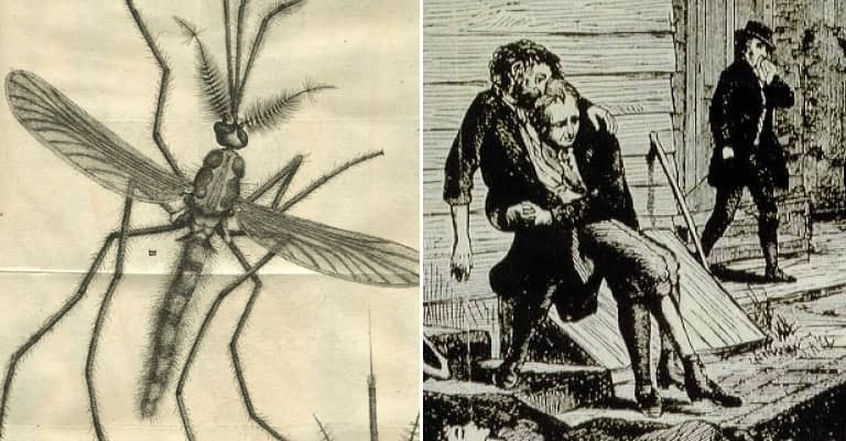 16 of the Most Horrifying Bug Infestations in History
