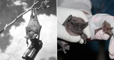 The Bat Bomb Invention and Other Odd Facts from History and War